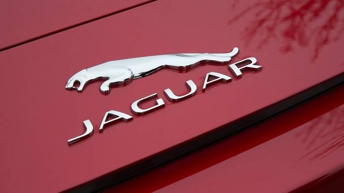 jaguar_pixabay